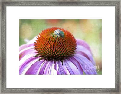 Beetle Bug Framed Print by Juli Scalzi