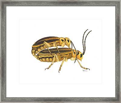 Chrysomelid Beetle Mating Pose Framed Print