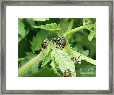 Framed Print featuring the photograph Beetle Posse by Thomas Woolworth