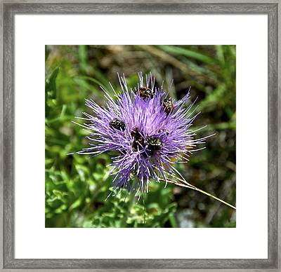 Beetlemania Framed Print by Dee Dee  Whittle