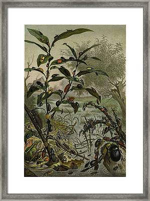 Beetles In A Flood Framed Print by English School