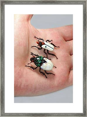 Beetles Framed Print by Tomasz Litwin
