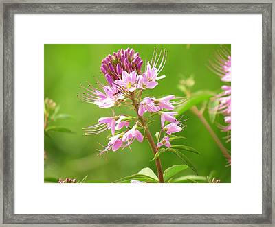 Beeweed . . .with Ant Framed Print by  Feva  Fotos