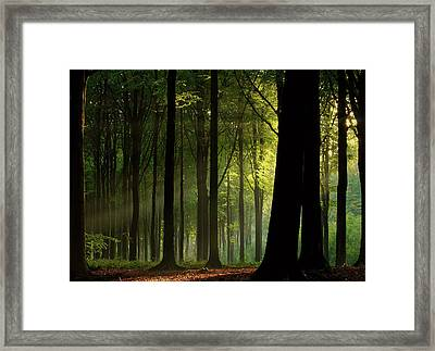 Before The Fall Framed Print