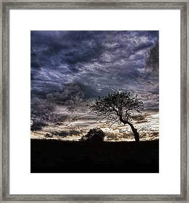 Nova Scotia's Lonely Tree Before The Storm  Framed Print