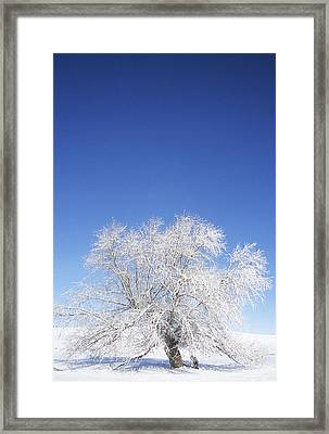 Before The Thaw Framed Print by Latah Trail Foundation