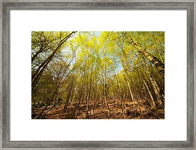 Beginning Of Spring Framed Print by Svetlana Sewell