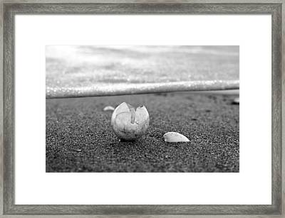 Beginnings Black And White Framed Print by Laura Fasulo