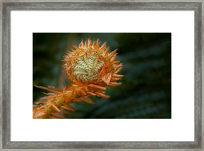 Framed Print featuring the photograph Beginnings by Jacqui Boonstra