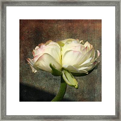 Begonia With A Tint Of Pink Framed Print