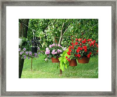 Begonias On Line Framed Print