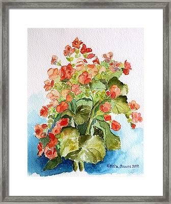 Begonias Still Life Framed Print by Geeta Biswas