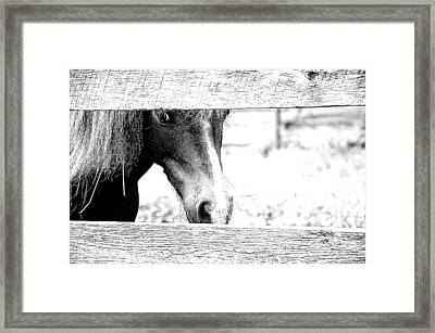 Behind The Fence Framed Print