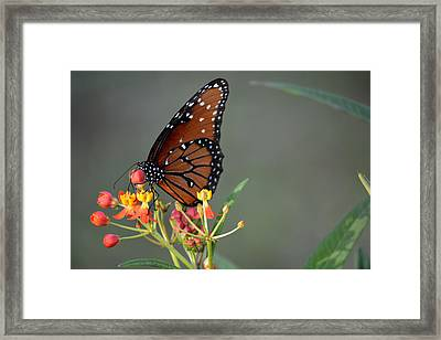 Behold The Queen Framed Print
