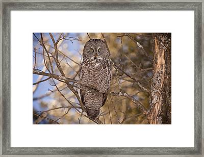 Being Observed Framed Print