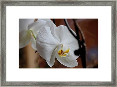 Framed Print featuring the photograph Being Pretty by Silke Brubaker