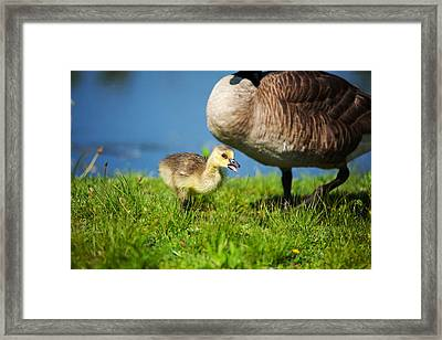 Being Watched Over Framed Print