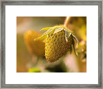 Being Young And Green Framed Print by Rona Black