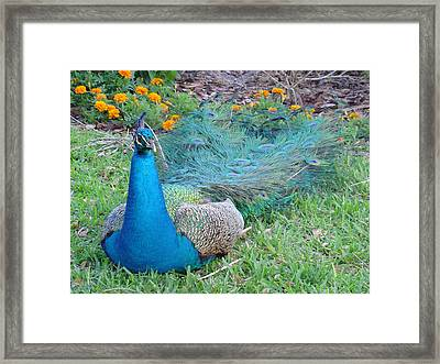 Framed Print featuring the photograph Bejeweled  by David Nicholls