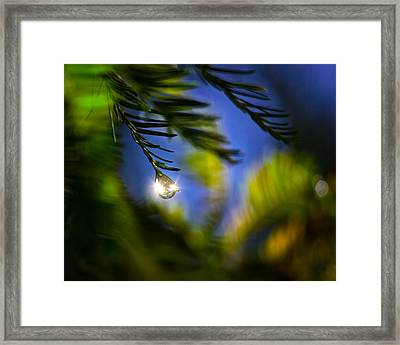Bejeweled Framed Print by Mark Andrew Thomas