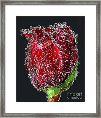 Bejeweled Rose Framed Print