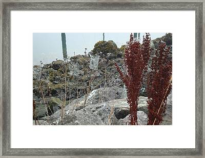 Bejeweled Framed Print