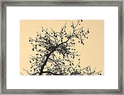 Bejewelled Nature Framed Print by Sonali Gangane