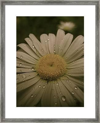 Bejewelled Framed Print by Tim Good