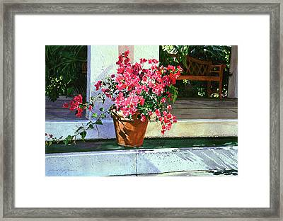 Bel-air Bougainvillea Pot Framed Print