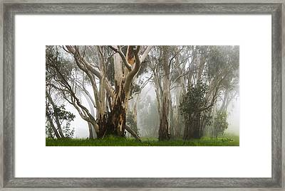 Feeling Misty Framed Print