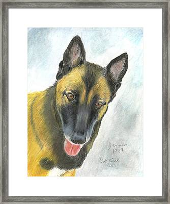 Belgian Malinois Framed Print by Ruth Seal