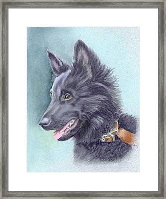 Belgian Sheepdog Puppy Framed Print by Ruth Seal
