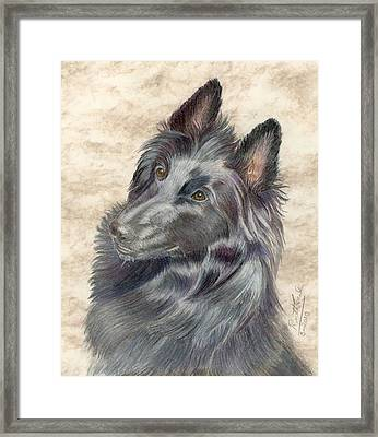 Belgian Sheepdog Framed Print by Ruth Seal