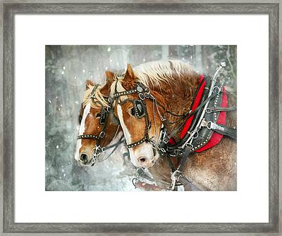 Belgian Snowflakes Framed Print by Judy Neill