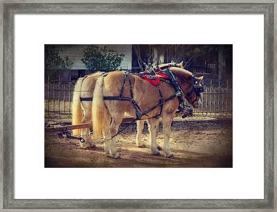 Belgium Draft Horses Framed Print by Charles Beeler