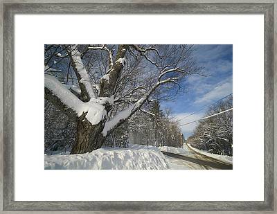 Belgrade Winter Framed Print