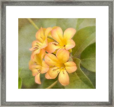Believe Framed Print by Kim Hojnacki