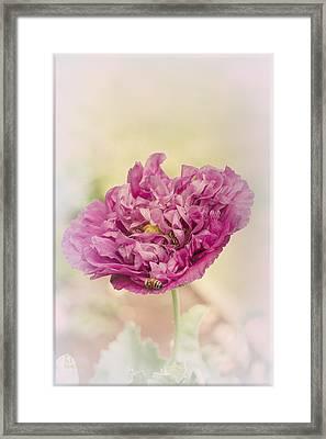 Belinda Framed Print