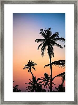 Belize Palms Framed Print