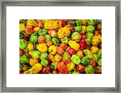 Belize Peppers Framed Print