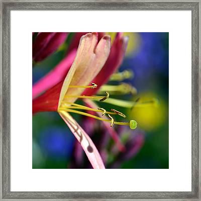 Bell Flower In Red Framed Print