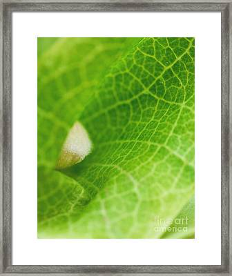 Bell Flower Framed Print by Irina Wardas