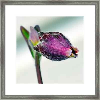 Bell Flower Framed Print by Tommytechno Sweden