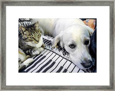 Bella And Peroni Framed Print by Photographic Art by Russel Ray Photos