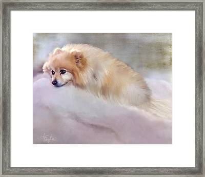 Bella Boo Framed Print by Colleen Taylor