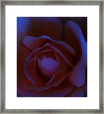 Bella Di Notte Framed Print by Michel Croteau