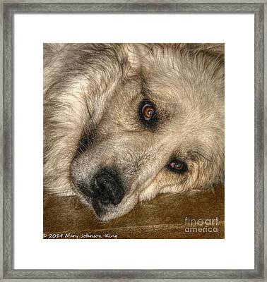 Bella Great Pyrenees Framed Print by Mary  King