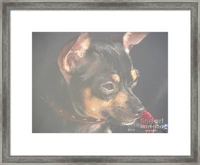 Bella Framed Print by Greg Patzer