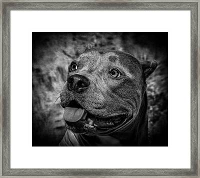 Bella In B/w Framed Print by Hugh Mobley
