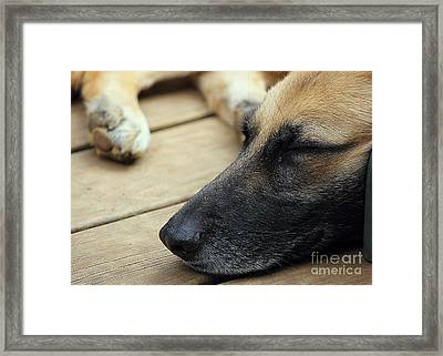 Framed Print featuring the photograph Bella by Lisa L Silva